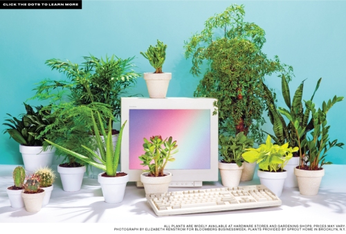 BBW_Plants
